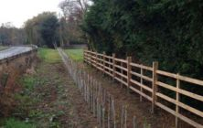 A new mixed Native species hedge against Lincolsnhire fencing at Eastoft