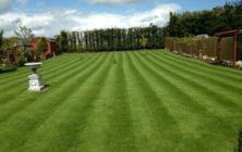 A new seeded lawn at Ludford after first cut and fertiliser application Spring 2013.