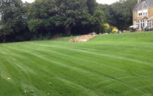 Walesby Lincolnshire. First cut on a newly seeded lawn area, old moss infested lawns were cultivated up and levelled. Photo taken 5 weeks from seeding date
